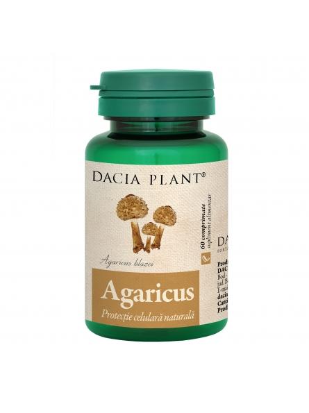 DACIA PLANT AGARICUS BLAZEI...