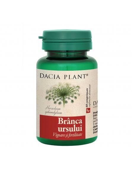 DACIA PLANT BRANCA URSULUI...